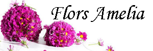 Logo comerç FLORS AMELIA